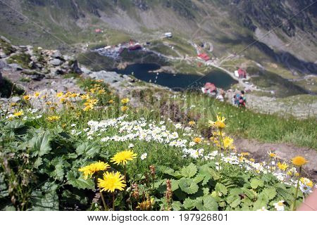 Colorful flowers in a sunny day in the mountains