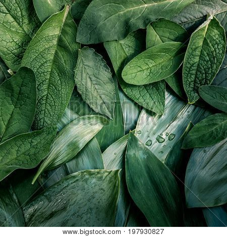 Leaves texture green natural organic background macro  leaf layout closeup toned