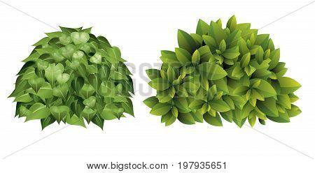 Vector illustration of garden bush with green leaves in cartoon style