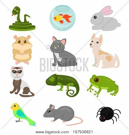 Vector illustration of home pets set isolated on white background, cat dog parrot goldfish hamster, amphibian, insects, bird in cartoon flat style
