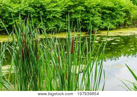 Delaware Canal Towpath and bulrush Historic New Hope PA USA