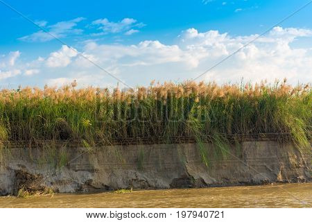 Bulrush On The Irrawaddy River, Mandalay, Myanmar, Burma. Copy Space For Text.