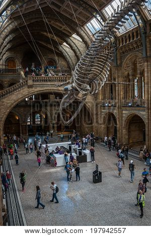 LONDON UK - JULY 30 2017: Natural history museum. General view on the main hall.