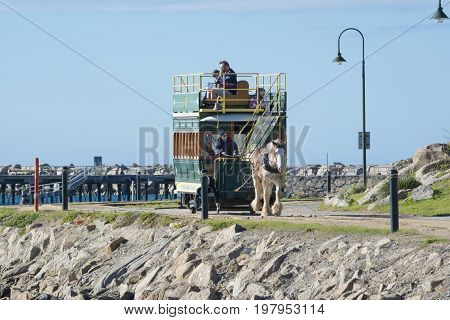 Victor Harbor South Australia: July 10 2017 - The iconic clydesdale pulling the horse drawn tram carrying tourists on Granite Island for it's return trip to Victor Harbor. Part of the Fleurieu Peninsula.