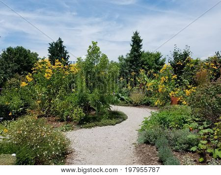 rock garden path with many yellow flowers and plants