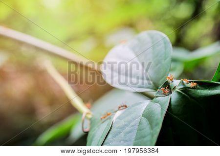 ant wildlife macro on nature background .