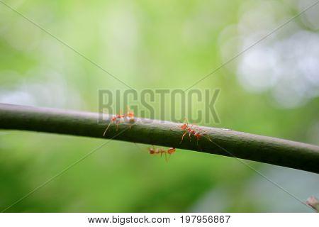 ant macro wildlife on nature background .