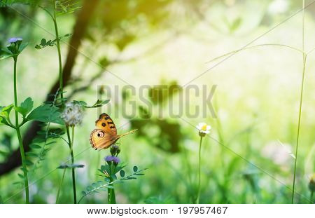 butterfly in garden on nature background .
