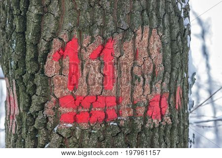 Hiking Trail Marking On The Tree Bark At Winter