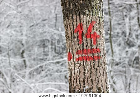 Hiking Trail Marking On The Tree Bark At Winter 2
