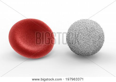 White Blood Cell With Red Blood Cell