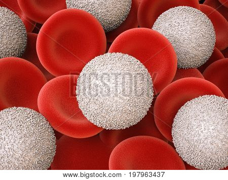 White Blood Cells With Red Blood Cells