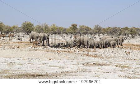 sunny arid savannah scenery including a group of african bush elephants seen in Namibia