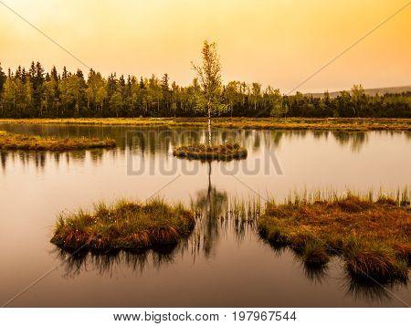 Chalupska Moor Lake near Borova Lada, Sumava Mountains, Czech Republic, Europe. Small islands with trees in the middle of peat-bog.