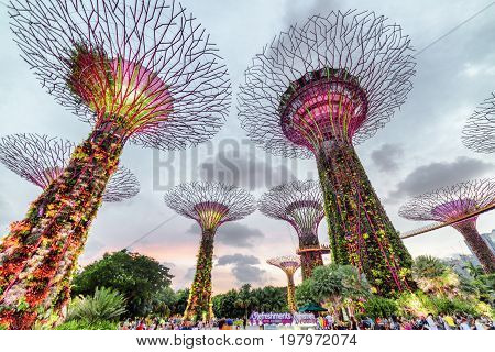 The Supertree Grove At Gardens By The Bay At Sunset