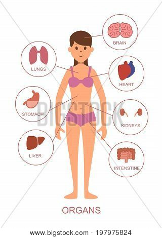 Internal organs of the human body. Anatomy of the female body. Human anatomy with internal organ, vector illustration