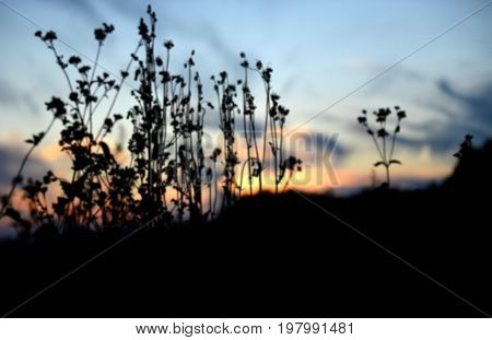 Blured Plant Silhouette On The Sunset Time
