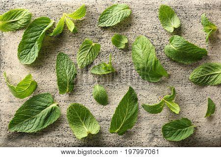 Leaves of lemon balm on textured background