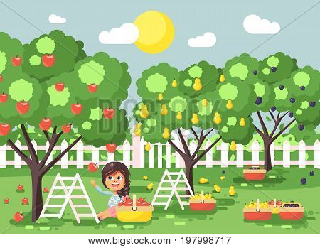 Stock vector illustration cartoon characters child brunette little girl harvest ripe fruit autumn orchard garden from plum, pear, apple tree, put crop in full basket landscape scene outdoor flat style