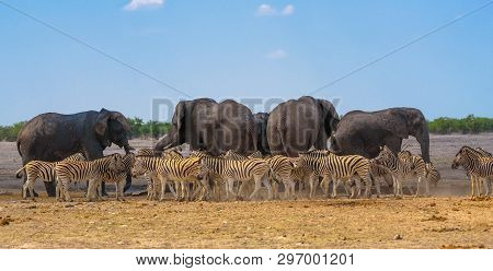 Panoramic African Scenery With Herd Of Elephants And Zebras At A Waterhole In Etosha National Park,