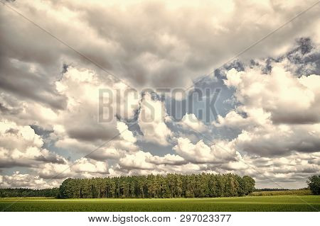 Forest And Green Field Nature Landscape On Cloudy Day. Sky With Lot White Clouds Above Forest Trees.