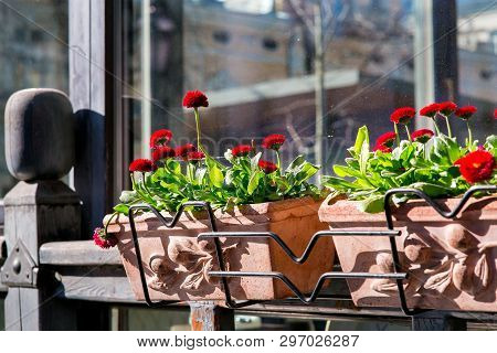 Stone Pots With Red Blossoms And Green Leaves On A Wooden Window Frame With Glass Closeup, Nobody.
