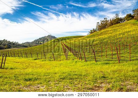 A Vineyard In Napa Valley, California On A Hillside Looking Down Rows Of Vines.