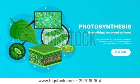 Photosynthesis Basic Information Website Horizontal Banner Design With Green Leaves Cells Chloroplas