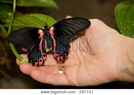 Butterfly Hand