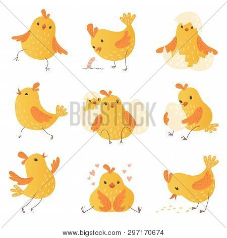 Cartoon Chicken. Egg Cute Yellow Little Farm Birds Funny Chick Vector Characters Collection. Chicken
