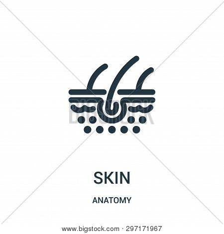 Skin Icon Isolated On White Background From Anatomy Collection. Skin Icon Trendy And Modern Skin Sym