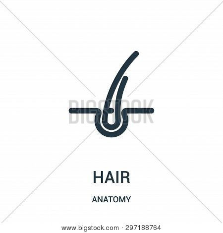Hair Icon Isolated On White Background From Anatomy Collection. Hair Icon Trendy And Modern Hair Sym