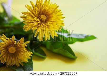 Spring Flower Landscape. Spring Blooming Spring Flowers On A Yellow Background. Blue Flowers In Spri