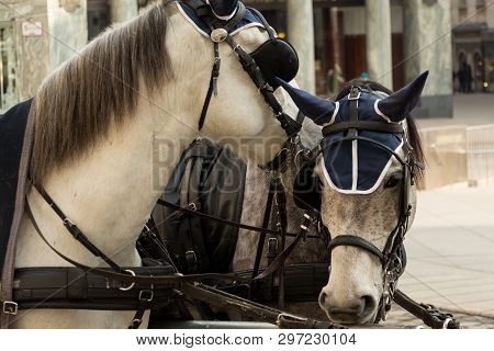 Two Horses In Blinders And Horsecloth. Portrait In Urban Space.