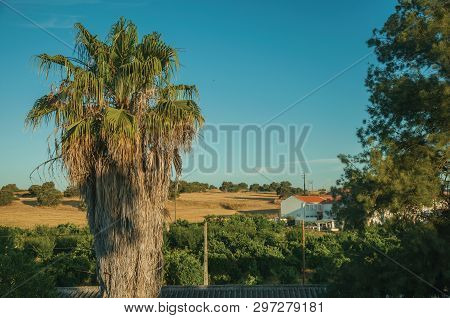 Countryside Landscape With Leafy Palm Tree, Fields And Cottage At Sunrise, On A Farmstead Near Elvas