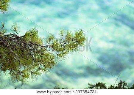 Green Pine Branch And Azure Turqoise Shallow Beach Sea As Beautiful Summer Season Tourism, Vacation,
