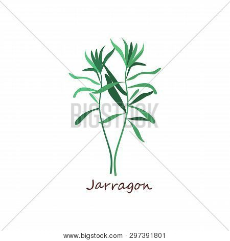 Sprig Of Tarragon. Green Leaves, Twigs, Estragon. Cooking Herbs Concept. Vector Illustration Can Be