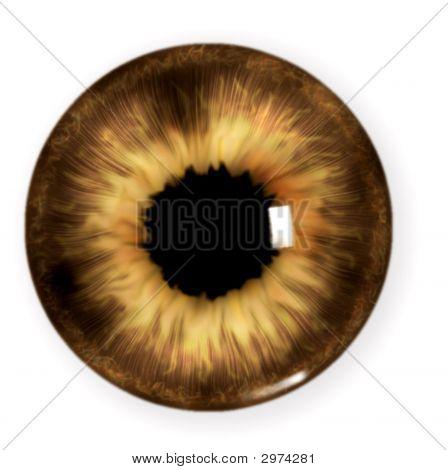 Brown Pupil