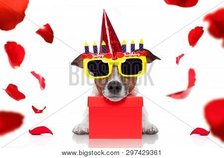 Happy  Birthday Jack Russell Dog With A Present Or Gift With Lots Of Roses Flying Around In Love For