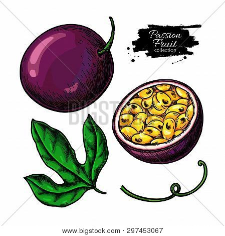 Passion Fruit Vector Drawing Set. Hand Drawn Tropical Food Illustration. Summer Passionfruit Objects
