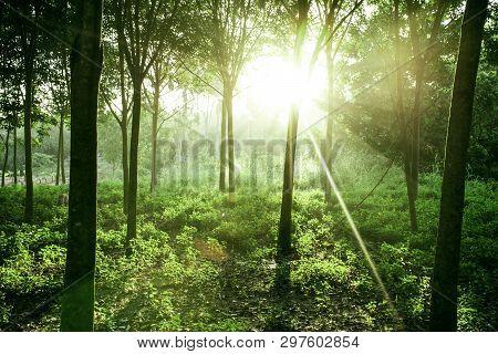 Beautiful Light Of Morning Sun In Thailand, Sun Light Shine Through The Tree In Morning, Beautiful F