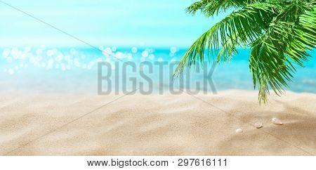 Coconut palm on the beach. Tropical sea.