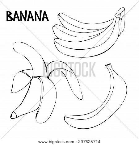 Vector Set With Bananas: Bunch Of Bananas, Unpeeled Banana, Peeled Banana. Linear Doodle Drawing Of
