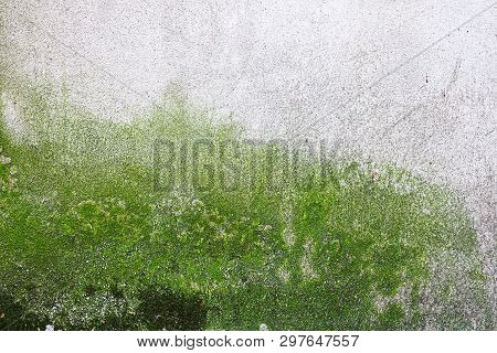 Moss And Algae Growing On Wall As A Result Of Dampness