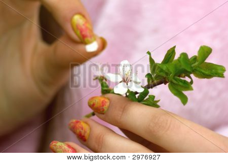 Fortunetelling On A Flower