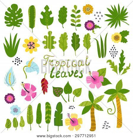 Vector Set Of Tropical Leaves And Flowers