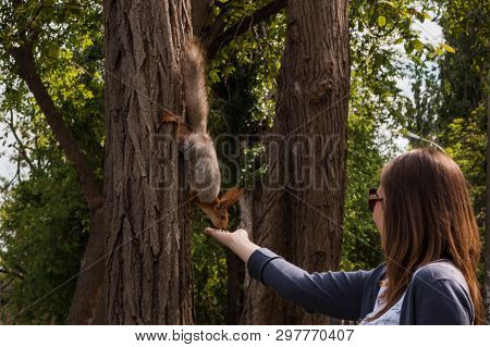 Young Woman Feeding With Hands A Little Red Squirrel In The Park. Squirrel Comes Down From The Tree