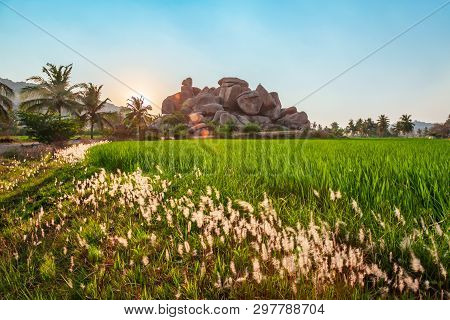 Rice Field And Mountain At Hampi, The Centre Of The Hindu Vijayanagara Empire In Karnataka State In