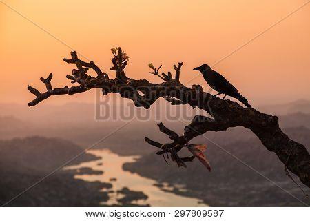 Raven On The Tree At Hampi, The Centre Of The Hindu Vijayanagara Empire In Karnataka State In India
