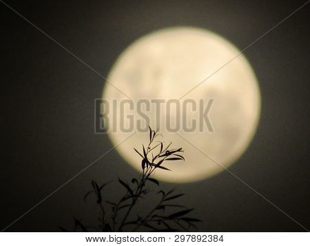 Noche De Luna En San Agustín, Cordoba